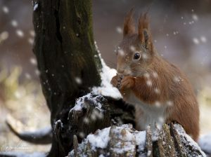 Squirrel 12 - FIAP diplom