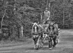 Man and horses bw