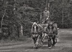 Man and horses